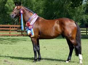 Konj traži novi dom